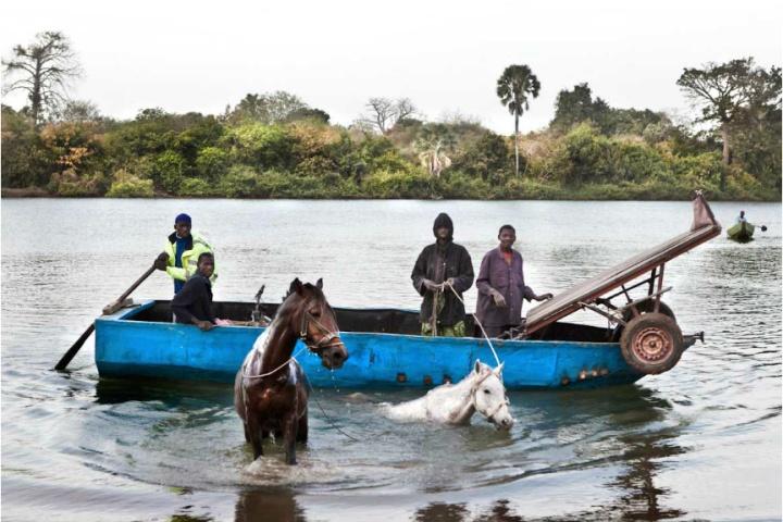 horses river