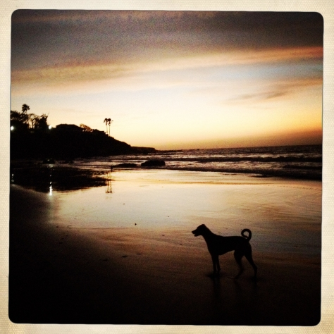 Beach dog IMG_3566