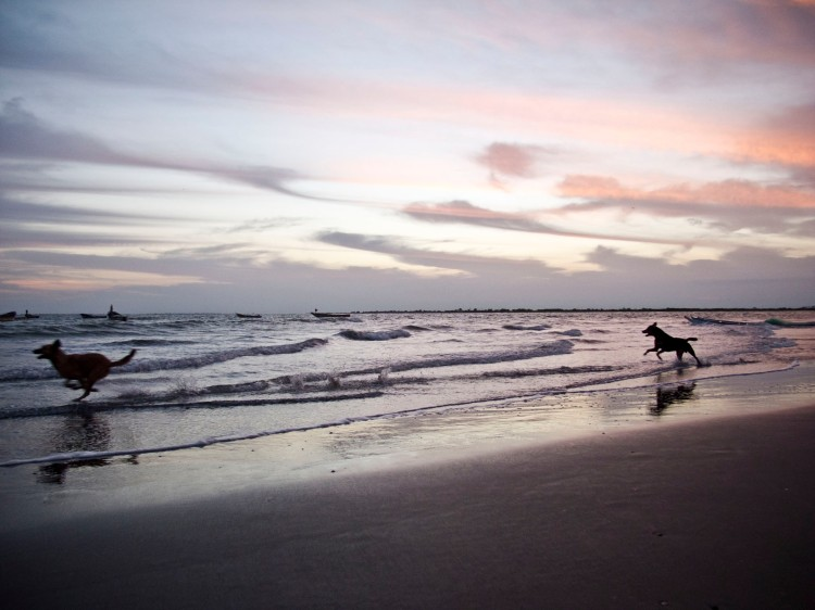 DOGS_BEACH_CPIMG_9875