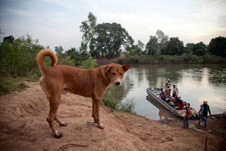 DOG RIVER GAMBIA KEDOUGOU