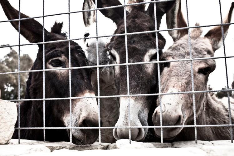 And very friendly donkeys!