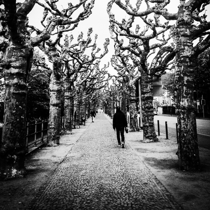 An avenue of trees, Frankfurt, Germany