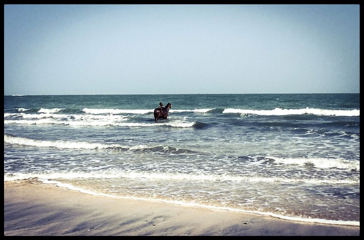 A horse gets scrubbed down in the Atlantic Ocean, The Gambia, West Africa © Helen Jones-Florio _4161