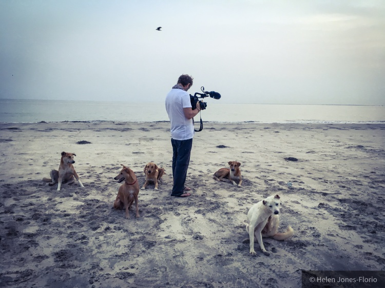 Cast of Extras - Dogs, dogs, everywhere! © Helen Jones-Florio Dogs of Gambia