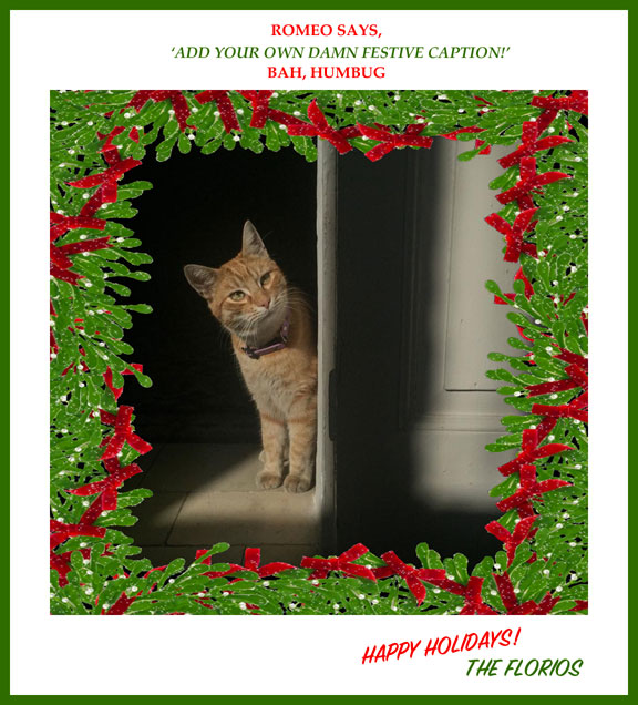 Romeo Cat 'Add your own damn festive caption' image © Jason Florio