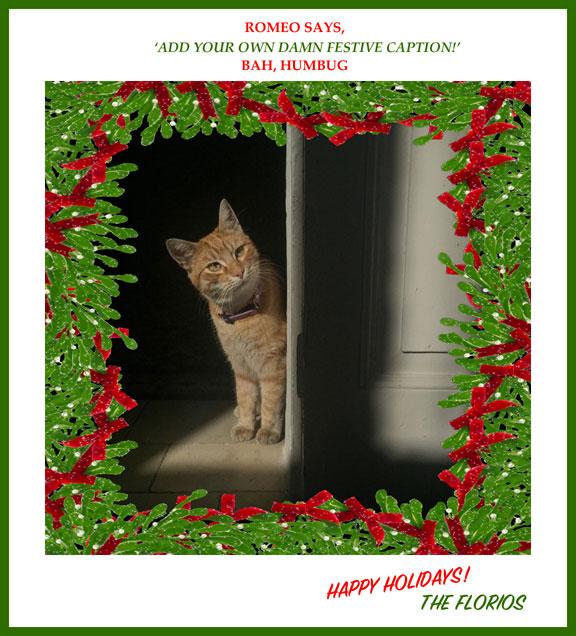 Romeo Cat 'Add your own damn festive caption' image © Jason Florio