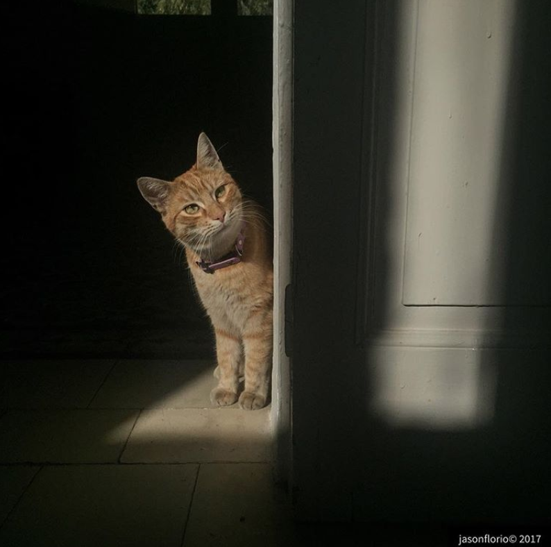 Photo of the Day - Curiosity and the Cat ©Jason Florio