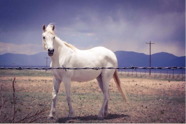 Wabi Sabi - white Horse standing alone in a field , New Mexico © Helen Jones-Florio