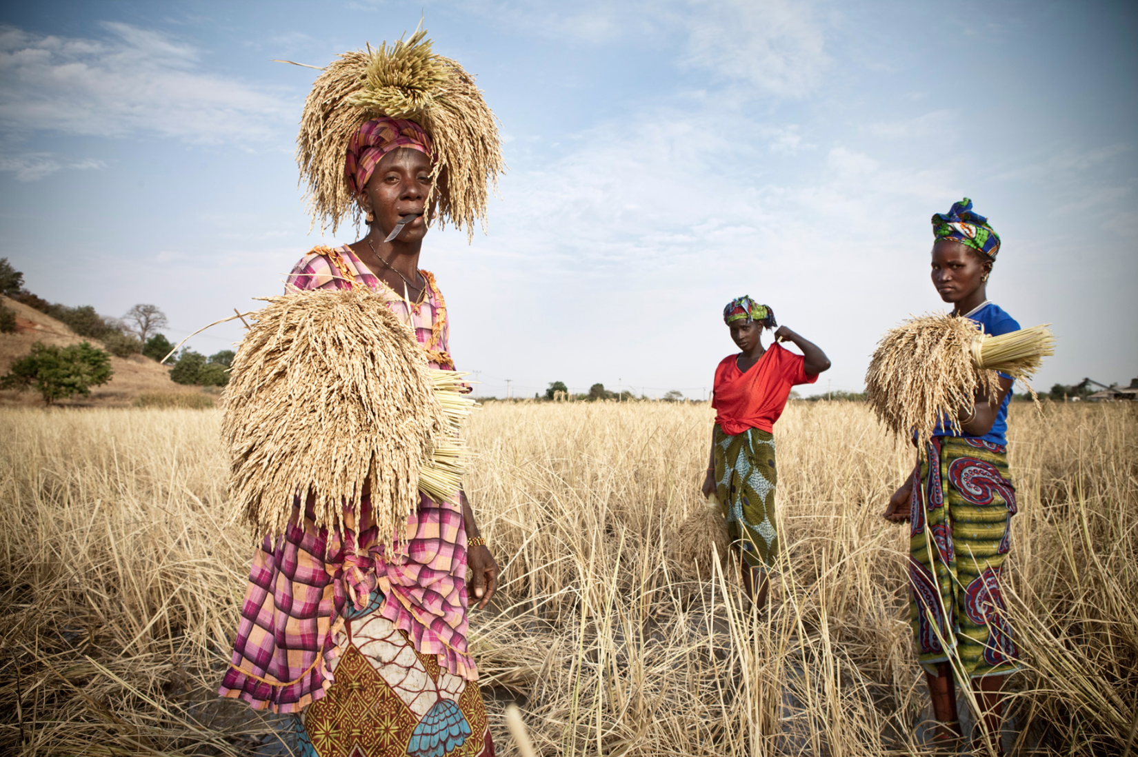 Ladies from the Santa Yalla kaffo - a collective that harvests rice for a landowner near River Gambia at Kaur. The earn 30 dalasis a day - 80 US cents ©Jason Florio