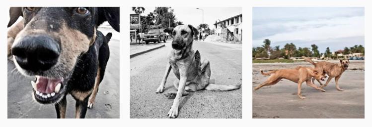 Walkin' the dogs, of the Gambia, West Africa © Helen Jones-Florio