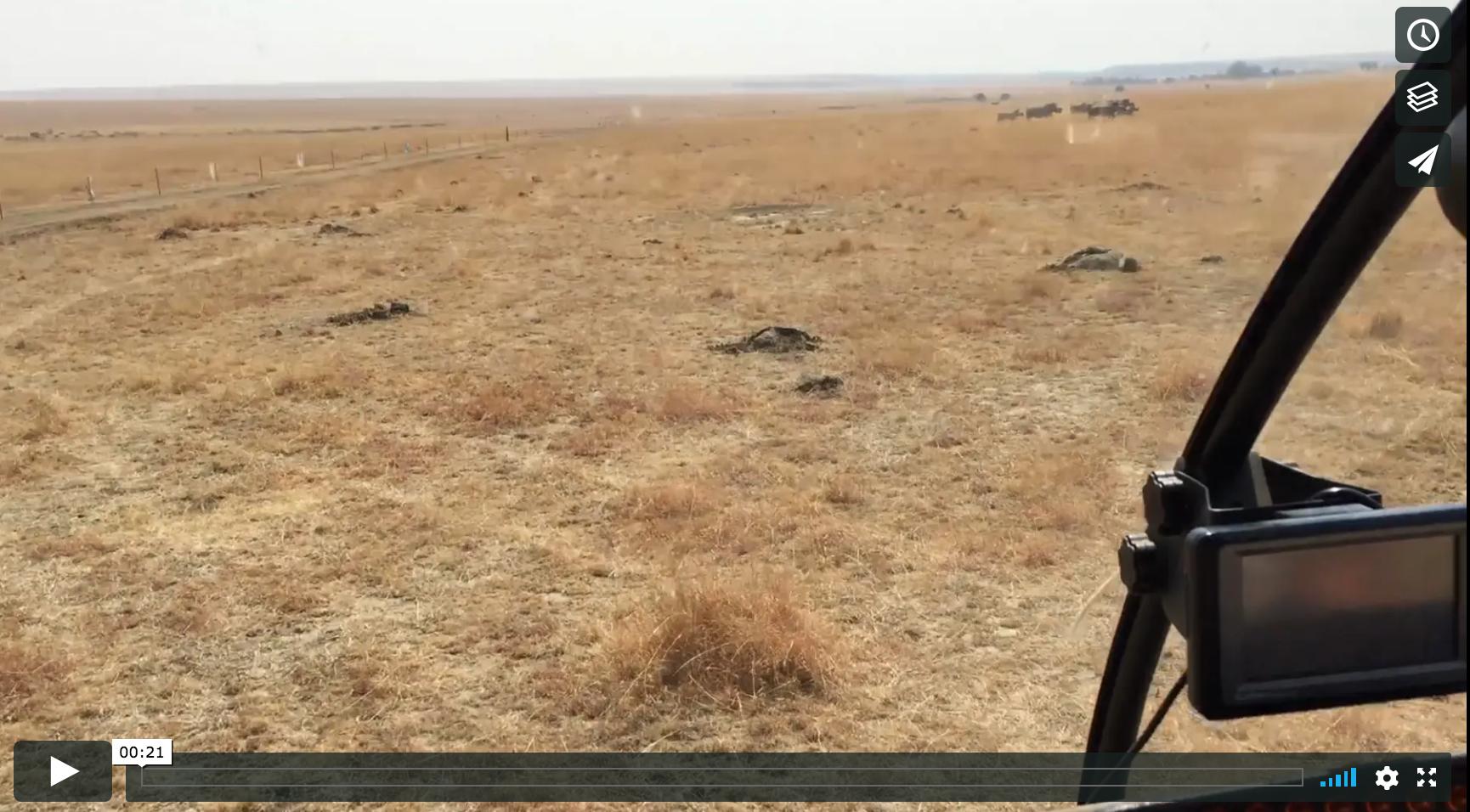 Vimeo - Rhino Relocation, South Africa © Jason Florio
