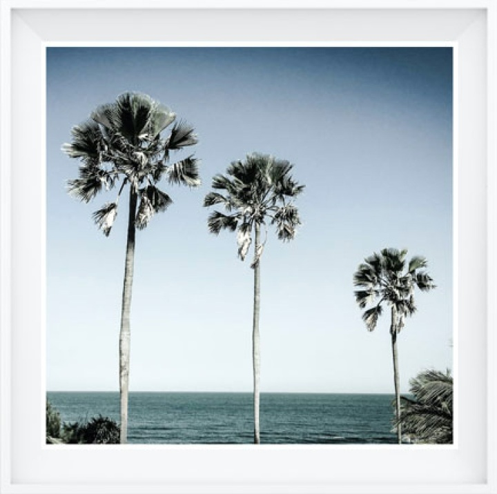 10x10 Photography Prints - 3 Palm Trees, Gambia, West Africa ©Helen Jones-Florio