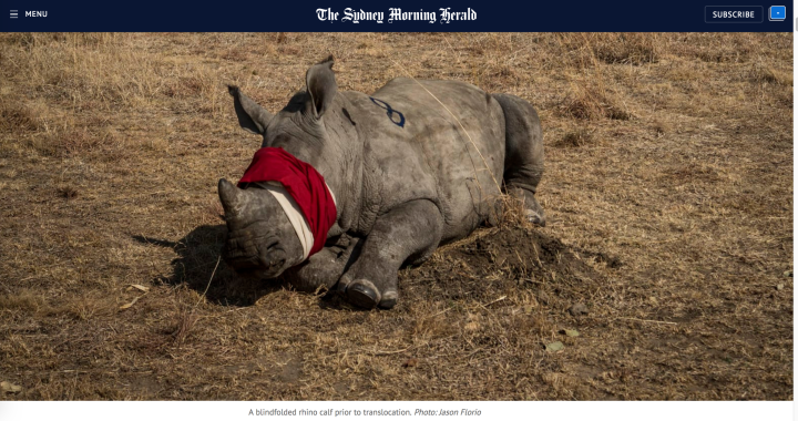 Rhino relocation, South Africa - image ©Jason Florio.  The Sydney Morning Herald