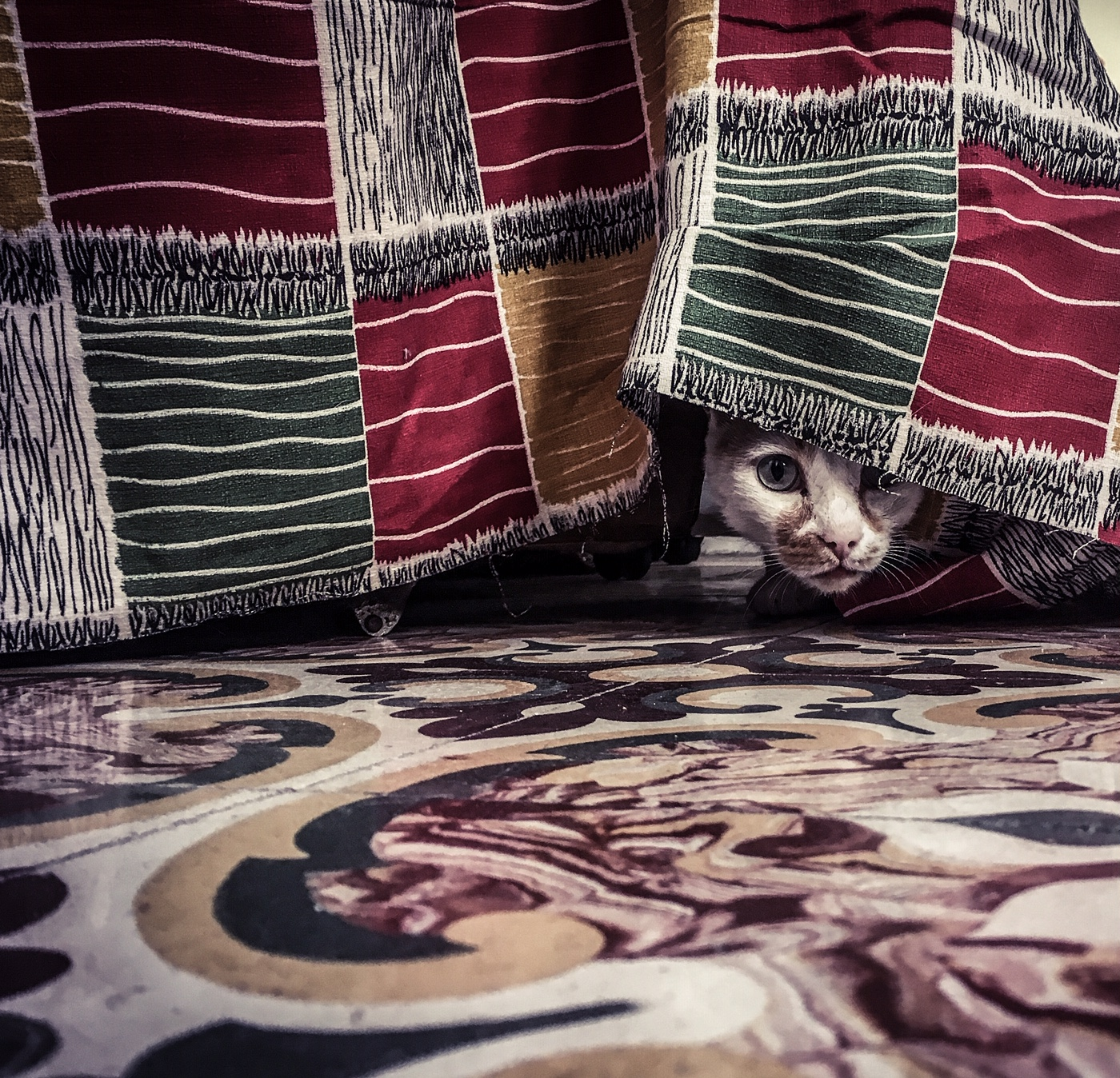 The Stray Cats of Malta- A white and ginger cat peeps out from under a chair, covered in fabric, with Maltese tiles on the floor. Image ©Helen Jones-Florio