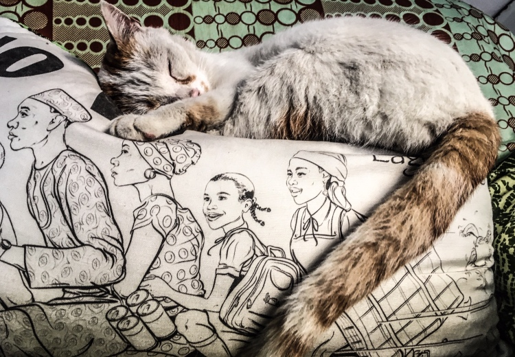 The Stray Cats of Malta - 'Choghm', a white and ginger cat, sleeps on a cushion from Nigeria, with the words 'No Wahala' and a drawing of a family on a motorcycle on the front of it.Image ©Helen Jones-Florio
