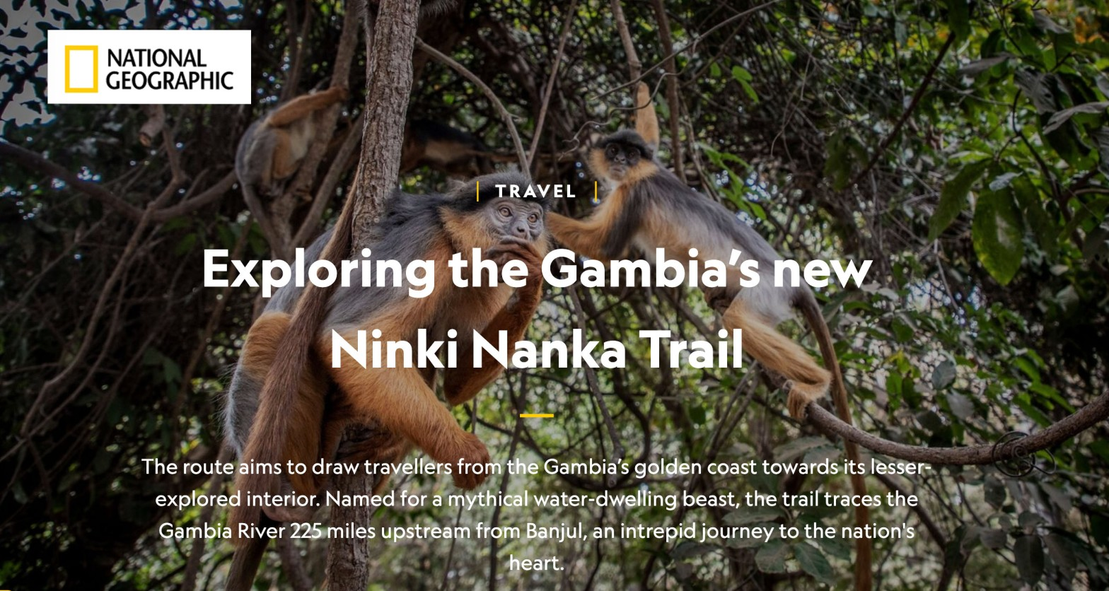NatGeo - opening shot of an article about the Gambia, with red colobus monkeys swinging in the trees. Image ©Jason Florio